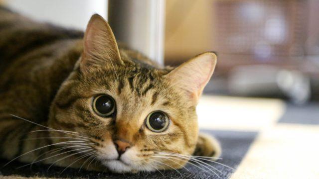 猫との暮らしにあると便利なグッズ5選!感想も詳しく紹介!