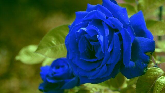 有村藍里(picki)新ブランドrose bleueが可愛い?どこで買えるかも紹介!